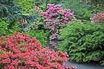 Seattle, WA<br /> Kubota Garden city park, flowering rhododednron and mounded shrubs surround a walkway to a garden pond