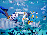 Snorkel divers with tropical fish. Bora Bora. French Polynesia
