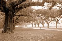 Doubletree Hallway