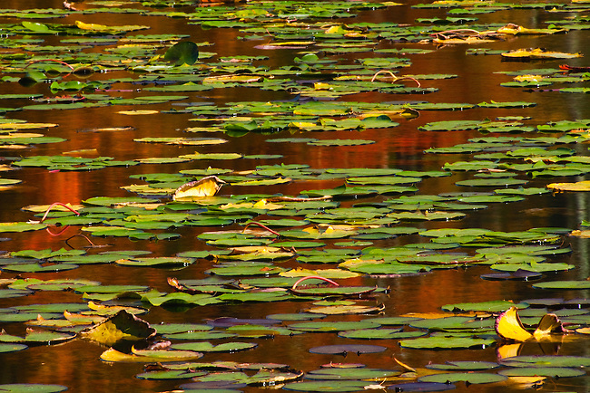 Autumn along Bass Lake, Moses H. Cone Memorial Park, Blue Ridge Parkway
