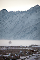A tree is dwarfed by the mighty Hindukush mountains. Driving up from Ishkashim town to Sarhad village, the end of the road in the Wakhan corridor.