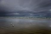Two seagulls watch dark rain clouds approach Ninety Mile Beach from the Tasman sea.