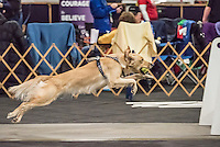 2016 Santa Paws Flyball Tournament held Dec 10 and Dec 11 at Finger Lakes Pet Resort Farmington NY