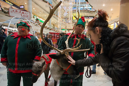 Woman pets a reindeer in a mall promoting the charity of the Santa Factory as part of Hungary's Christmas celebrations in Budapest, Hungary on December 02, 2014. ATTILA VOLGYI