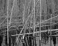 """Trees In Blackwater"" <br />