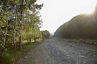 FOREST_LOCATION_90135