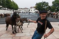 Europe/France/Aquitaine/64/Pyrénées-Atlantiques/Pays-Basque/Sare: Lors du  Concours De Pottok [Non destiné à un usage publicitaire - Not intended for an advertising use]