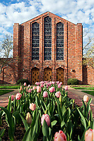 Tulips blooming at the Chapel of Memories.<br />  (photo by Beth Wynn / &copy; Mississippi State University)