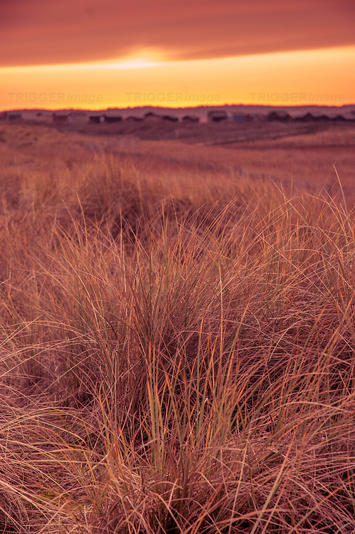Sunset at Walberswick in Suffolk England with grasses in the sand dunes