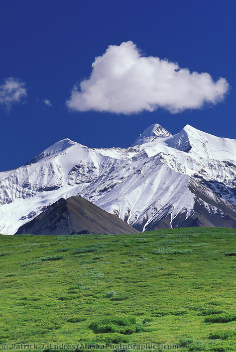 Snow covered Alaska mountain range, summer green tundra, grassy pass, Denali National Park, Alaska.