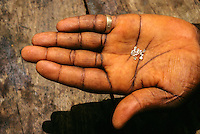 Tortiya, Ivory Coast. Broker Holding   Diamonds in his Hand.