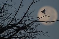 The Moon is the only natural satellite of Earth. With an equatorial diameter km1 3474 is the solar system's largest satellite fifth, while as compared to the proportional size of its planet is the largest satellite: one quarter the diameter of Earth and 1/81 its mass.<br /> Una de las primeras lunas llenas del año 2013 se pudo apreciar hoy  antes del anocecer sobre el cielo al  oriente de la ciudad de Hermosillo, Sonora.<br /> La Luna es el único satélite natural de la Tierra. Con un diámetro ecuatorial de 3474 km1 es el quinto satélite más grande del Sistema Solar, mientras que en cuanto al tamaño proporcional respecto de su planeta es el satélite más grande: un cuarto del diámetro de la Tierra y 1/81 de su masa. **  Foto© : LuisGutierrez **