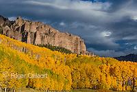 Aspen, Populus Tremula, Cimarron Valley, Uncompahgre National Forest, Colorado