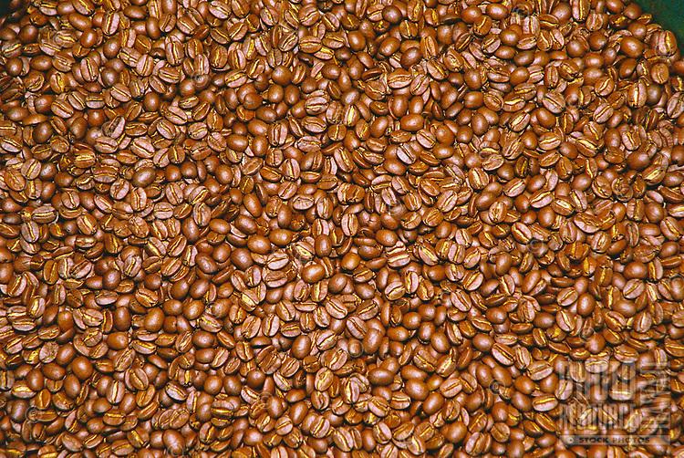 Close up of roasted coffee beans, Kona, Big Island
