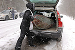 Woman putting a freshly cut Christmas tree in a trunk of a car. Ontario Canada.