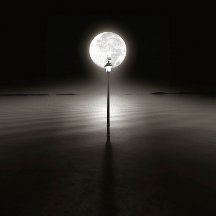 A seagull sitting on top of a lamp post at night silhouetted by the moon