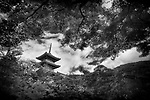 Dramatic artistic black and white photograph of Sanjunoto pagoda of Kiyomizu-dera Buddhist temple in Kyoto, Japan in a beautiful scenery behind Japanese maple trees.