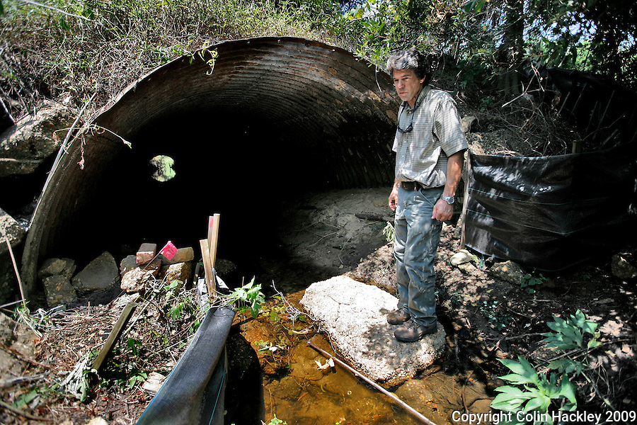 TALLAHASSEE, FLA. 6/24/09-ECOPASSAGE CH02-Matt Aresco, a wildlife biologist with the Lake Jackson Ecopassage, scans the area around the existing culvert connecting Lake Jackson and Little Lake Jackson, June 24, 2009 in Tallahassee. Aresco's group wants to build additional culverts so turtles and other animals can safely cross under US Highway 27. They say the project will protect motorists and animals alike. The project has recently come into the national spotlight after U.S. Sen. Tom Coburn, R-Okla., questioned using federal money to help fund it. ..COLIN HACKLEY PHOTO.