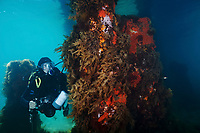 A diver under Portsea Pier, Victoria, Australia. MR