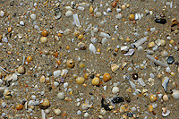 Seashells on the beach at Saint-Cast-le-Guildo, Brittany, France.