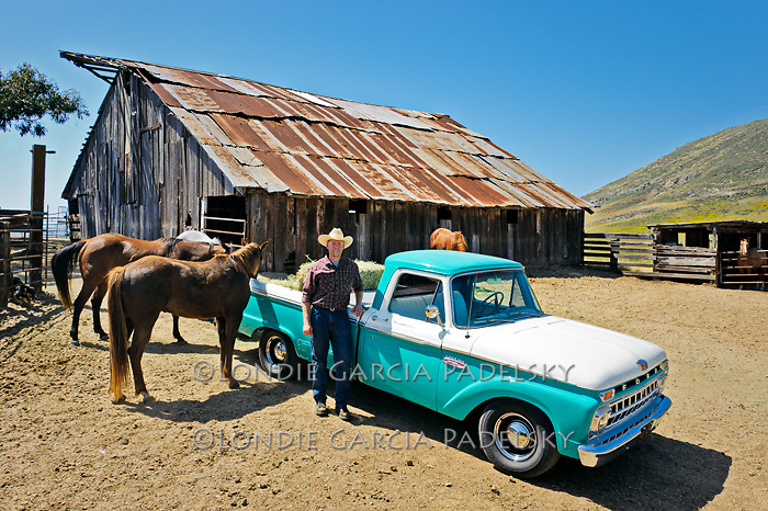 Jason Haase feeding horses with his 1968 Ford Pickup Truck, San Luis Obispo, California