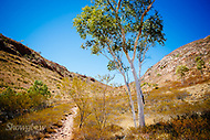 Image Ref: CA525<br />