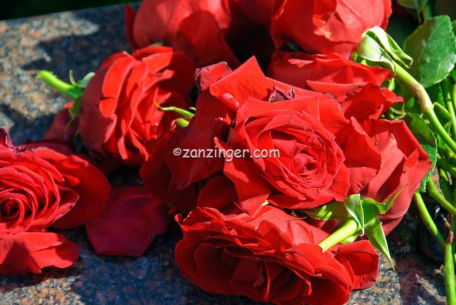 Roses left on Rodney Dangerfield Gravesite, Westwood Village Memorial Park celebrity, graves