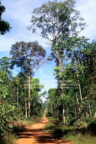 Juruena, Amazon, Brazil. Dirt road through the rain forest.