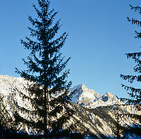 View of the Alps and the fir trees that surround the chalet