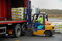 Loading ewe cobs on to a lorry at a feed plant using a fork-lift truck...Copyright John Eveson 01995 61280..j.r.eveson@btinternet.com