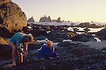 Olympic National Park, Shi Shi Beach, Point of the Arches, Washington State, Pacific Northwest, couple harvesting mussels, Pacific Ocean, Northwest coast, Olympic Peninsula, North America, USA,.