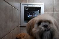 Employees and trainers work with dogs at The Grand Pet Resort and Salon in Fort Worth, Texas, Friday, September 3, 2010. Dogs can come to the resort to be groomed or enjoy a room with a TV and music and live web cam for owners to watch from home or the office. ..MATT NAGER for the Wall Street Journal