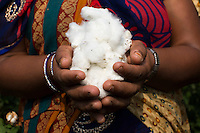 Fairtrade cotton farmer Sugna Jat, 30, in their farm in Maheshwar, Khargone, Madhya Pradesh, India on 13 November 2014. Sugna and Nandaram do the farming together and hire labourers at a fair wage when they need to. Photo by Suzanne Lee for Fairtrade