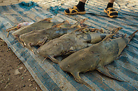 Fish caught in Si Phan Don are sold at the local market of Nakasang. 05/08/2013 © Thomas Cristofoletti / Ruom