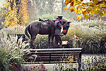 WEATHER INPUT - SATURDAY 9th Novemeber 2019<br /> <br /> Pictured: On this remembrance weekend, a frosty start to the day at the War Horse and Trooper statue, in the War Memorial park, Romsey, Hampshire.   The statue was created by Amy Goodman.<br /> <br /> A single leaf is spotted falling from a tree full of autumn colour.<br /> <br /> Please byline: Natasha Weyers/Solent News<br /> <br /> © Natasha Weyers/Solent News & Photo Agency<br /> UK +44 (0) 2380 458800