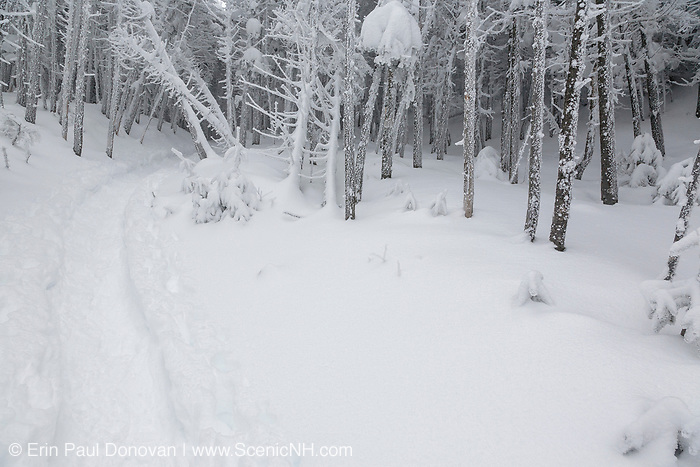 Snow covered forest along  the Willey Range Trail in the White Mountains, New Hampshire USA during the winter months.