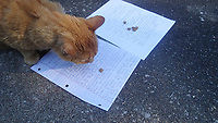 NWA Democrat-Gazette/FLIP PUTTHOFF <br />Boat Dock, chief judge of the fish story contest, goes to Joy Long's story to get his cat treat. That makes Joy the winner and 2017 fish-story champion. The story at right is by Edward Michan of Sulphur Springs, our runner-up by a whisker.