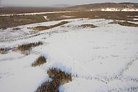 Aerial of sled dog teams on swamp area Kuskokwim River Nikolai to McGrath 2006 Iditarod Western Alaska