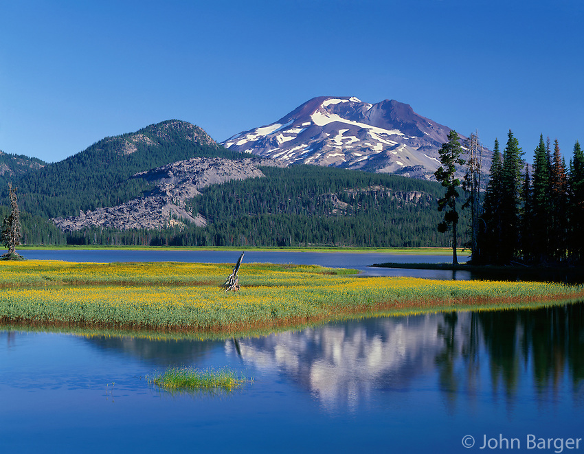 ORCAC_081 - USA, Oregon, Deschutes National Forest, Leafy arnica blooms on an island in Sparks Lake with South Sister rising in the distance.
