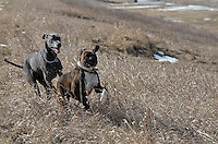 Porky and Anastasia at Perch Creek and at Darcy McKeough Floodway