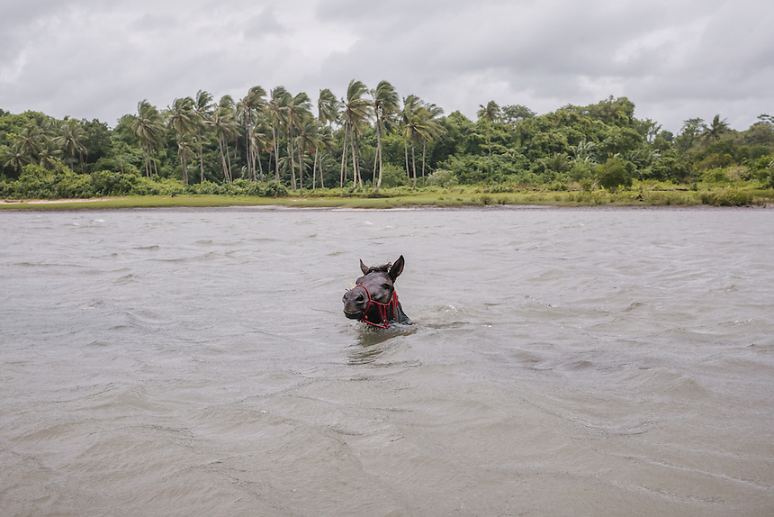 A Pasola horse in Waiha river, near the village of Wainyapu, Kodi. Pasola is an ancient tradition from the Indonesian island of Sumba. Categorized as both extreme traditional sport and ritual, Pasola is an annual mock horse warfare performed in response to the harvesting season. In the battelfield, the Pasola warriors use blunt spears as their weapon. However, fatal accident still do occurs.