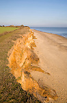 Rapid coastal erosion of soft cliffs between Benacre and Kessingland on the Suffolk coast England. The cliffs were formed by glacial outwash of sands and pebbles which overly older clay strata. This structure of permeable rock over impermeable clay makes the cliff especially prone to slumping and mass movement.