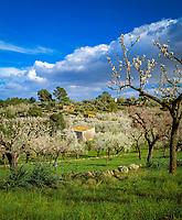 Spanien, Balearen, Mallorca, Mandelbluete | Spain, Balearic Islands, Mallorca, Almond blossom