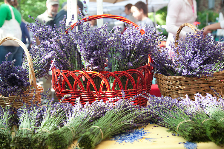 The Portland Farmers' Market on Saturday Mornings in the South Park Blocks offers fresh, organic and locally grown produce, meat, fish and other food products.  Pictured here is fresh Lavender from Sundance Lavender Farm in Salem, Or.