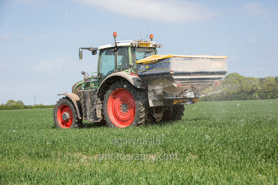 Applying nitrogen to Winter Wheat - Lincolnshire, April