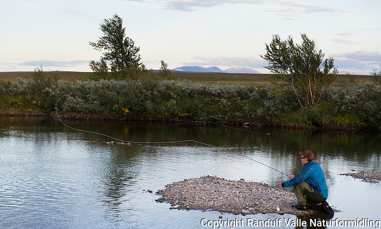 Mann fisker etter laks med flue i liten elv langt inne på vidda. ---- Man fishing for salmon in small river.