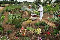 "In Valenton, Val de Marne, France, a garderner-apiculturist in the garden of association ""Le Jardin du Cheminot"" opens a beehive, a cliché of traditional beekeeping."