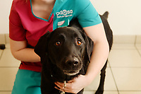 BNPS.co.uk (01202 558833)<br /> Pic: PDSA/BNPS<br /> <br /> PICTURED: Marley needed a lifesaving operation after gorging on over 30 home-made gingerbread decorations.<br /> <br /> Marley the dog nearly became Marley the ghost after gorging on 34 gingerbread Christmas tree decorations.<br /> <br /> The seven-year-old Labrador swallowed the ribbons attached to each treat which caused a potentially-fatal blockage in his stomach.<br /> <br /> Owner Rachael Bulmer rushed Marley to the vets when he was sick and he had to undergo a lifesaving operation to remove the green ribbons.<br /> <br /> His chances of survival looked so poor at one stage his owner prepared to say goodbye to her much-loved pooch.<br /> <br /> But following two operations Marley came through his ordeal and is now back at home in time for Christmas.