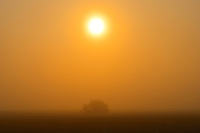 Morning fog and deciduous tree<br /> Argyle<br /> Manitoba<br /> Canada