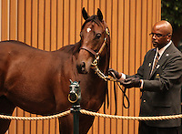 Hip #107 Street Cry - Justwhistledixie at the Keeneland September Yearling Sale.  September 10, 2012.